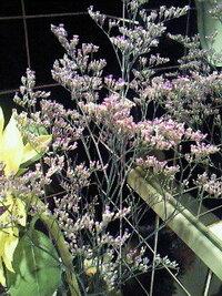 この花の名前を教えてください 紫色で茎が細くドライフラワーみたいに乾燥気味です