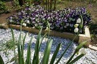 パンジーの次に植える花 夏椿の株元に花壇を作ってパンジーを植えました。 そろそろ花もおしまいで、だいぶ乱れてきています。 植え替えをしたいのですが、どんな花がいいと思いますか?  夏椿は去年植えたのでどのように花が咲くのか いまひとつ理解していませんが、夏に白い花が咲くと 聞きました。相性の良い素敵な植物を教えてください。  写真はすずらん水仙をメインに撮ったのでわかりづらい...