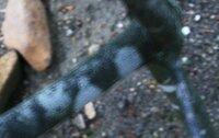 ドウダンツツジの幹、枝の部分に白い斑点ができました。 何か病気か栄養不足なのでしょうか?またその対処方法など教えていただければ大変助かります。 写真をアップしました。よろしくお願いします。