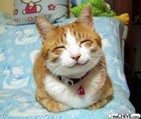 【笑うネコ】この画像の猫ちゃんは、コラではなく本当にこんな顔なのですか?  画像検索で見つけました 元々こんな顔なのだとしたらとても飼い 主さんが羨ましいです  この笑顔見てるだけで幸せになれますね ネコの画像はよくコラなどでいじられていたりするので、もしかしたらこのネコもそうなのかなと… コラでも可愛いですが  ご回答お待ちしておりま