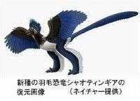 鳥はいつどこから飛んで来たんですか? . ・・・(前略)・・・ チームはシャオティンギアと始祖鳥、恐竜、鳥類の骨格や羽毛を比較した。 その結果、顔の先端部の特徴などから、始祖鳥とシャオティンギアは、 鳥よりも羽毛恐竜のミクロラプトル(白亜紀前期)やトロオドン(同後期) などに近かった。 鳥の期限は、長い4本の羽を尾に持つエピデクシプテリクス(ジュラ紀中~後期) や孔子鳥(白亜紀...