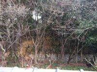 傾斜地に隣接する土地の購入についての質問です。平地の横に小高い山があり法面には沢山の樹木が生えています。 その土地と法面の境目には昔ながらの石垣が150cmぐらいの高さで積まれています。 62坪ほどの土地です。北側に法面があるので、北側ギリギリに建築して南側を広く取りたいと考えています。ネットで崖条例 という言葉を見たのですが、下の土地の所有者がよう壁などを造作してがけ崩れ対策をしないと...