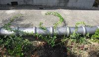 バラの植え方、こんなので大丈夫でしょうか? 大阪在住のガーデニング初心者です。  ガレージの上に作った庭の上から前面道路に向けて 花を枝垂れさせたく、 クリムソン・シャワーという匍匐性のつるバラを購...