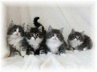 2匹の兄弟猫の名前を考えてください 兄弟の猫を飼うことになりました  両方男の子です  対になる和風の名前でいいのがあったらおしえてください  ブラウンとブルー(グレーっぽい)の毛です  真ん中の2匹です  (以前飼っていた子が紫苑くんという名前でした)