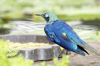 掛川花鳥園で見た鳥ですが、この鳥の名前を教えて下さい