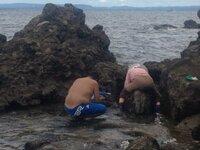先日神奈川県横須賀市の猿島に行ってきました。磯のほうに降りていると釣り人のほかに大量にハマグリ アサリ?採ってを網にいれている人たちがいました。漁業権はないのでしょうか?漁師さんたちが育てているとも...