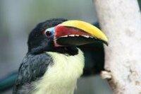 掛川花鳥園で見た鳥なのですが、名前を見損ねてしまいました。 この鳥はなんと言う鳥でしょうか?