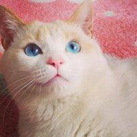 白くて青い目の猫は、珍しいですか? うちの猫は野良猫だったのですが、目が青くて白です。