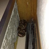 今家に帰ったら扉のところに蛇がいました>_< 動かないんですけだ、生きてはいるみたい? この蛇がなんていうヘビで毒の有無、どうやって追い払ったらいいか教えてください>_<