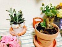 この観葉植物の名前と育て方を教えてください。