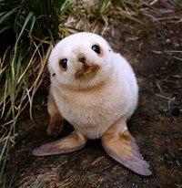 この赤ちゃんの動物の名前を教えてください!