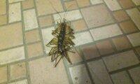 この虫の名前教えてください テレビゲームでしか見たことのない虫が家の中にいました。 足がたくさんあって、赤黒いやつです。  気持ち悪すぎます。