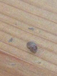 観葉植物についているこの虫が気になります。何という虫ですか?害虫ですか?