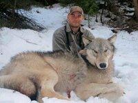 何回もオオカミの質問してすみませんm(__)m この間単独で最強のイヌ科の質問をして囲いの中なら横綱土佐犬で自然界ならオオカミとなりましたが  イヌ科どうしならやっぱり最強どうしを戦わせなければ意味が無いと思ったので改めて質問させて頂きます。  まず囲いの中での勝負10×10mで横綱土佐犬と狼王ロボクラスまたカナダで捕獲された89キロの個体或いは下の画像の狼と戦わせてどっちが勝つでしょう??...