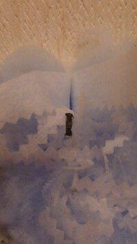 家の天井にかなり小さいミノムシみたいなのがぶら下がってました!!!!画像の黒いのの中にイモムシが入ってました…(´д`   )何虫だか解りますか???