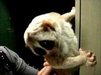 なんでこの動物は「淫夢くん」と呼ばれているのですか? それと、何でこの動物は淫夢ネタと関係があるのですか?