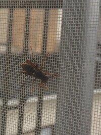 良い方法を教えてください! 困っています。 蜂を追い払いたいのです。。。 ベランダの網戸の内側と窓の間に大きな蜂が6時間以上います。 結構大きいです。。。 万が一、女王蜂でこのまま 巣を作ったらと思うと怖いです。 勇気を振り絞り、網戸を少しだけ動かし隙間を作ったので、いつでも飛び立てるはずなのに、蜂は飛ぶどころかほとんど動きません。 出来たら逃がしてあげたいのですが、私は怖すぎ...