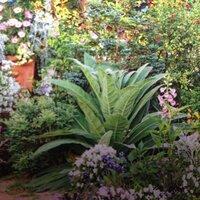 この画像の中心にある大きい葉っぱの植物の名前を教えてください。