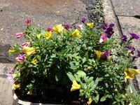 この花の名前とオススメの用土を教えて下さい