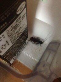 冷蔵庫の中にゴキブリがいました…食べ物の中で卵とか産みませんかね?…何方か対策法を教えてください…お願いします!