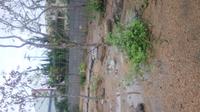 多湿に強い植木はありますか?2m強の椿を冬に5本ほど移植しましたが、夏にほとんどが枯れてしまいました。大雨後は水溜まりが一日中残っています。基本的に水はけが良くない、日当たりは良い場所です。根元の露草な どは元気です。出来れば常緑樹でお勧めを教えてください。または、土質改善策が必要なのでしょうか?