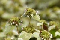この花の名前を教えていただけないでしょうか。撮影日は8月29日、撮影場所は熱川市の花壇です。