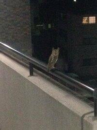 家の前にフクロウがとまってました。 何か良いことのある前兆でしょうか? また、このフクロウはなんというフクロウでしょうか?