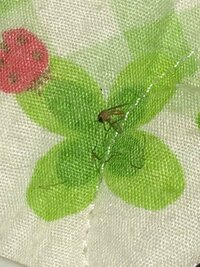 先ほどキンチョール退治した蚊をテーブルに置いて観察したところ、蚊は死なずに蚊の脚が胴体から切り離される現象が起きました。キンチョールにはそういった効果があるのでしょうか?