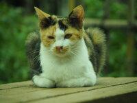 三毛猫  子猫がいたら連れて帰る?  野良猫