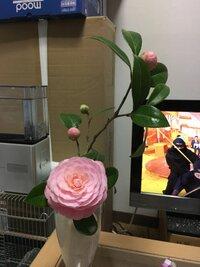 八重椿の切り花をいただきました。部屋の中で長持ちさせるにはどうやって飾っておけばよろしいでしょうか。