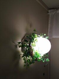 賃貸の団地に住んでいます。トイレの電灯が壁に付いてる白熱灯のハダカ電球だけなんです。それがいやで100円ショップで小さなリースとニセモノのグリーンを買って来ました。リースにグリーンを 巻き付けて電球に...