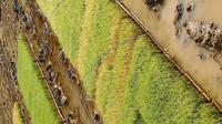 水稲苗について。 育苗箱の苗が写真のように黄色くなっています。品種は飼料用米のオシアオバです。  黄色くなっている部分の土がドブ臭いです。他の元気な苗に比べて根の張りも悪い気がします。 根腐れでしょうか。それとも他の病気が考えられますか。  水管理や消毒・薬等で対処できるでかょうか。  元気な部分にも広がってしまうでしょうか。  見えづらい写真ですが、もし何かわかるようでしたらご教授下さい。...