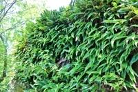 植物について質問です。この植物はなんという名前でしょうか?   ちなみに撮影場所は、岐阜県(岐阜城)で、撮影日は6月18日です。よろしくお願いいたします。