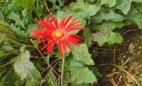 茎の細長いこの赤い花の名前分かりますか?