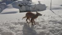 今日家の前に来たのですがこの画像の動物は野犬なのかキツネなのか意見が別れています。 わかる方どちらか教えてください。