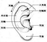 耳輪の部分にピアスを開けると痛いですか? また軟骨と、耳輪は違うところでしょうか…?