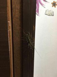 この蜘蛛は、なにかわかる方いますか?撃退法も知りたいです。お手洗い場に現れて緊急で困ってます。
