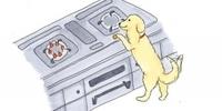 飼い犬が火災の原因とは・・・ というかこの犬馬鹿犬でしょ?