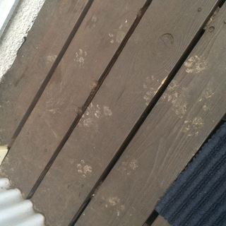 ネズミ,クマネズミ,足跡,ドブネズミ,いたちごっこ,バルサン,駆除業者