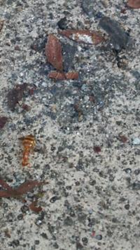 普段見かけないアリを見たのですが、これはヒアリ(火蟻)などの害虫ではないか気になりました。 詳しい方、教えて下さい。
