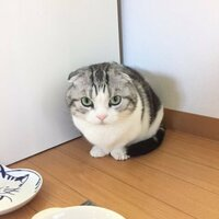 猫ちゃんは部屋の隅っこが好きなのかニャ? (ФωФ)