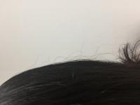 髪の傷みについて……  私の髪の毛は猫っ毛で、とても細いですが、枝毛はほとんどなく、どちらかというと綺麗でした。 でも最近、髪の表面に、写真のようなちぢれ毛がでるようになりました。ち ぢれ毛は硬くて、...