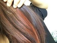 この春から社会人です。 工場勤務です。 髪の毛の色の指定はなにも無いのですが、一応髪の毛を暗くしようと思っています。 ですが休みのうちにインナーカラーをブリーチし、エンシェールズで 赤に染めました。...