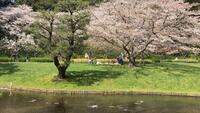 なぜ、ソメイヨシノ韓国起源説が消えないか?  ↓こちらも参考にしてください。  ↓日本と韓国と桜、根拠がなくても「韓国起源」が消えない理由とは? (2018.04.09) http://yukashikisekai.com/?p=53655  韓国は本当に厄介である。  皆様はどう考えますか?