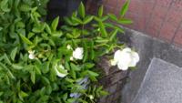 この花 の名前、教えて下さいね 小さいトゲがありますので バラ科でしょうか?