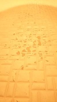 浴室の床(サーモフロア)の表面保護層が剥がれてしまい困っています。  修繕方法をご存知の方がおられましたら、お教えください。 (リクシルに相談したところ、修復の事例がないとオペレーターに言われました。)