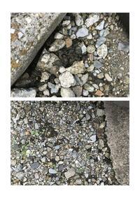 アスファルトの駐車場に未知の植物?藻?の様なものが徐々に繁殖しております。 ...  アスファルトの駐車場に未知の植物?藻? の様なものが徐々に繁殖しております。 気味が悪いのですが正体は何でしょうか?...