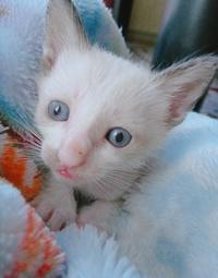 先月うまれた子猫なのですが、この目はなにかの病気ですか?