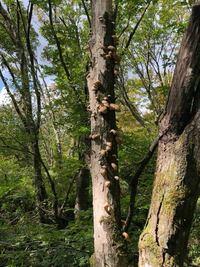 中国地方の低山で見つけたこのキノコの種類をご存知の方、いらっしゃいますか?