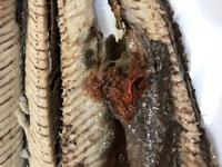 秋刀魚を焼いて、ほぐしていたらこの様な赤い物体が出てきました。 これは何なんでしょうか? 秋刀魚は食べても大丈夫でしょうか?